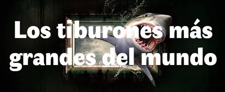 Los 5 tiburones más grandes del mundo