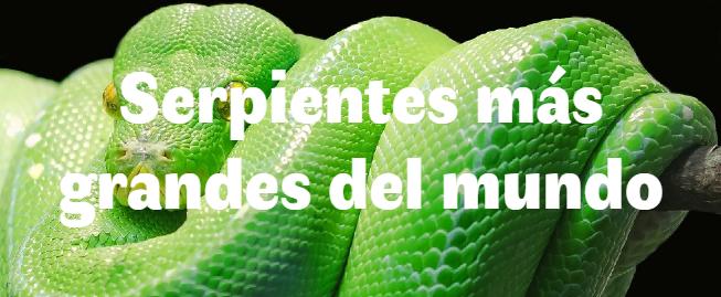 Las 6 serpientes más grandes del mundo