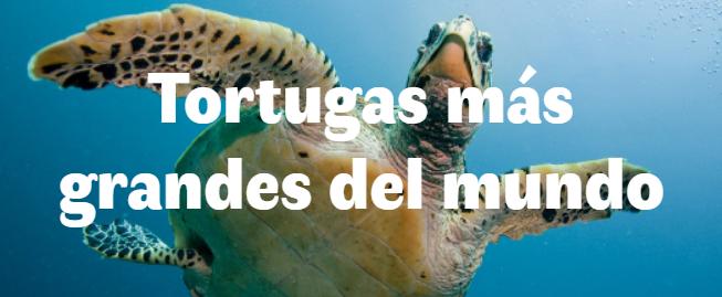 Las 7 tortugas más grandes del mundo