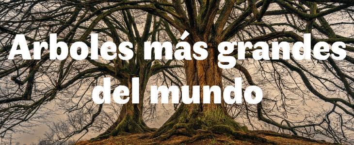 Los 5 árboles más grandes del mundi