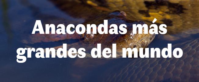 Las 4 Anacondas más grandes del mundo