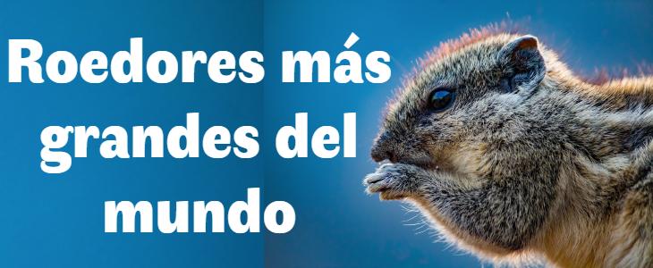 Los 7 roedores más grandes del mundo