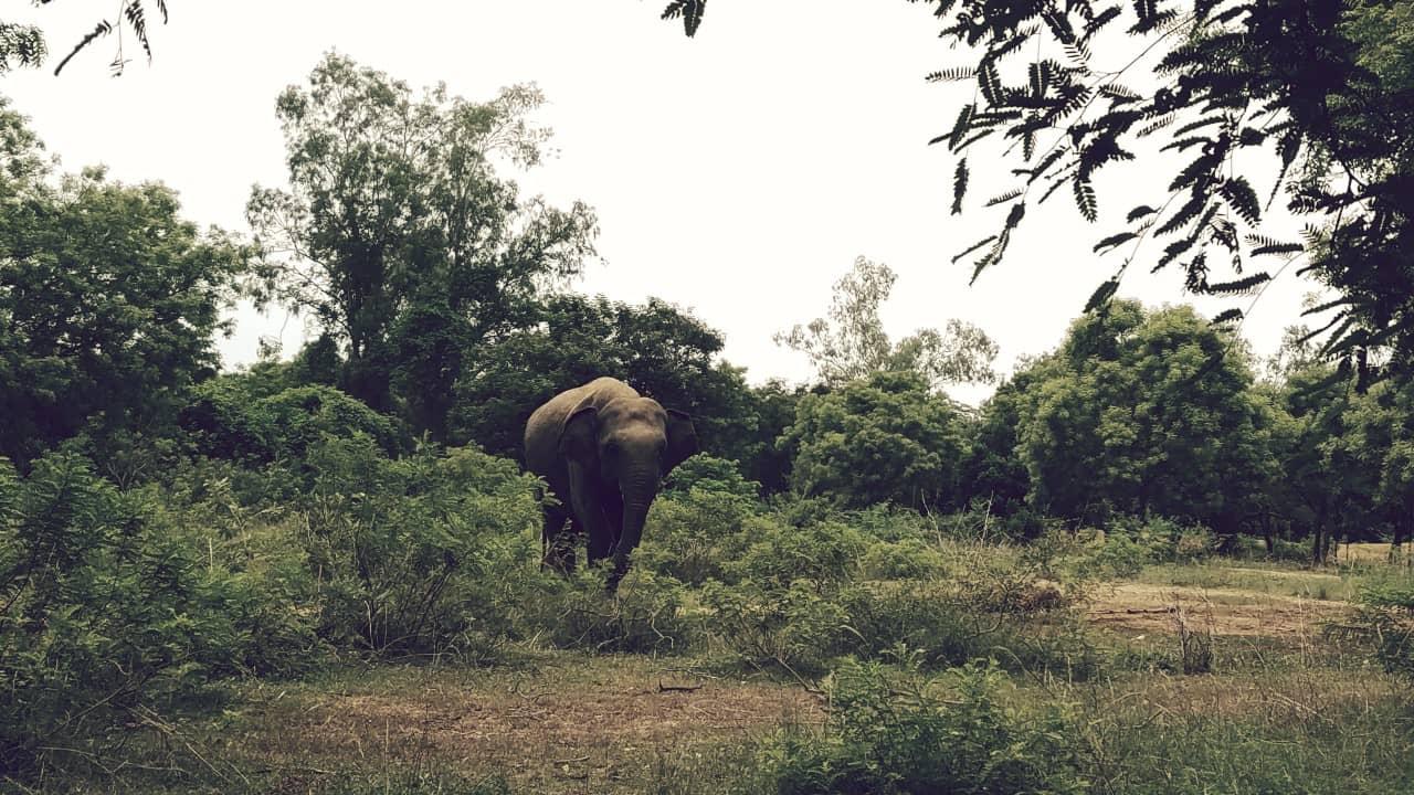 Arigna Annar, el 4rto zoológico más grande del mundo
