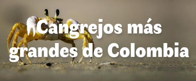 Los 6 cangrejos más grandes del mundo