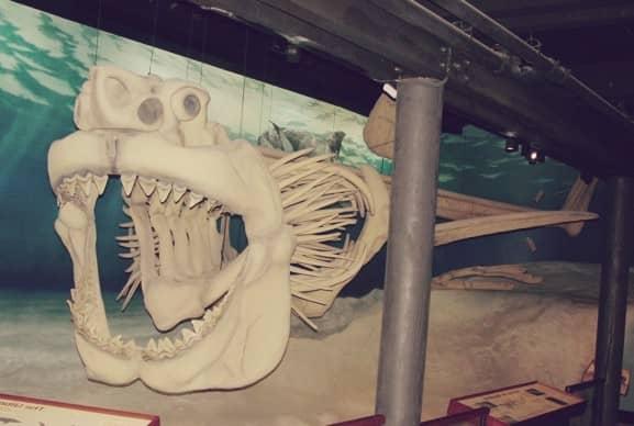 Megalodón, el segundo animal más grande de la historia