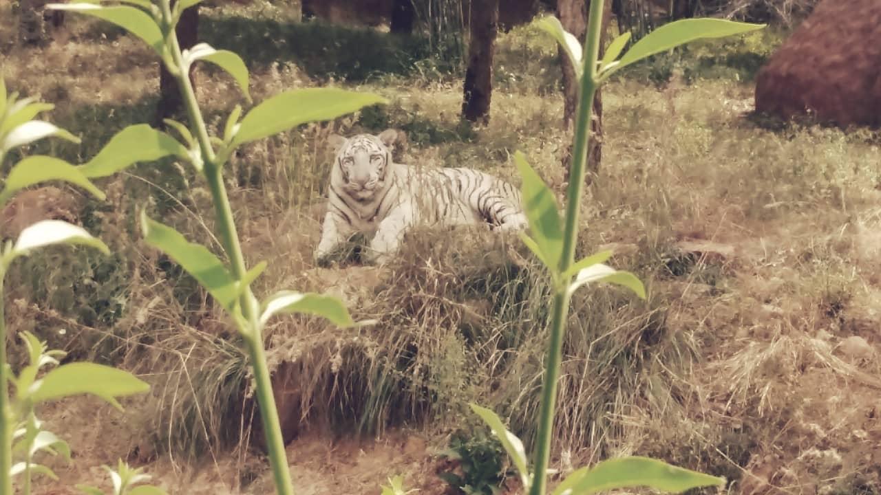 Sri Venkateswara, el segundo zoológico más grande del mundo