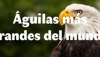 Las 10 águilas más grandes del mundo