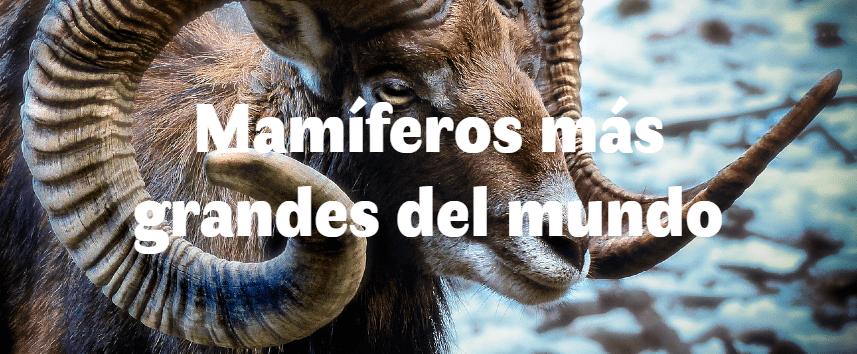 5 mamíferos más grandes del mundo